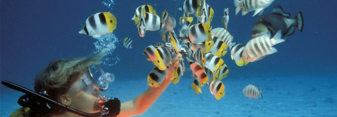 La plongée & L'apnée